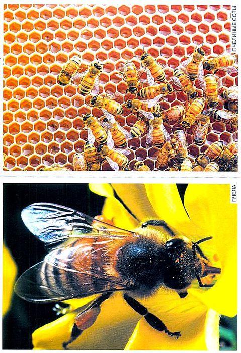 насекомые в картинках знакомство с окружающим миром