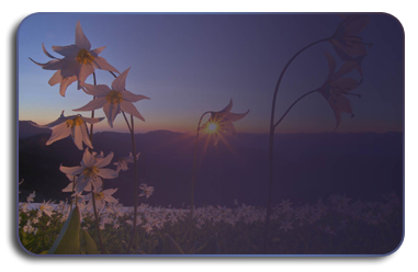 закат-обр (381x248, 96Kb)