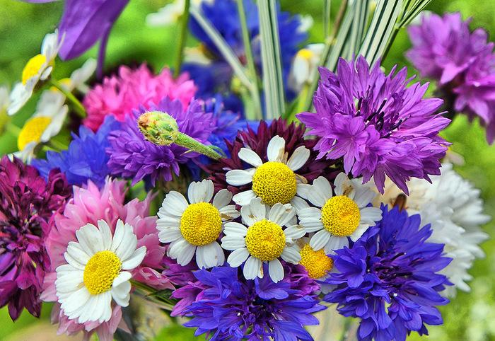 Любителям цветоводам садовые