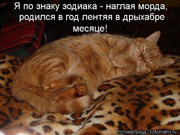 kotomatritsa_ga (604x453, 66Kb)
