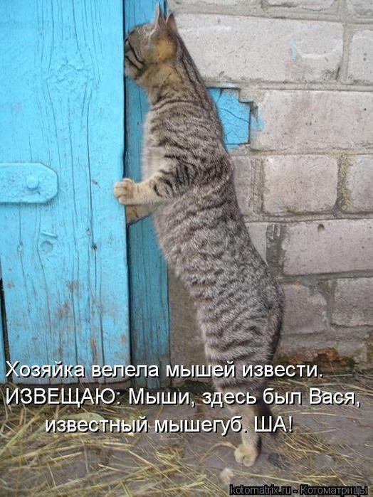 kotomatritsa_Ma (524x700, 75Kb)