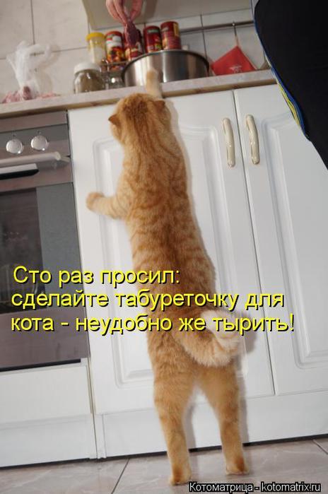 kotomatritsa_Xm (464x700, 43Kb)