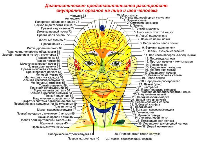 проекции органов на лице