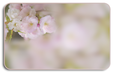 цветы-обр (377x248, 88Kb)