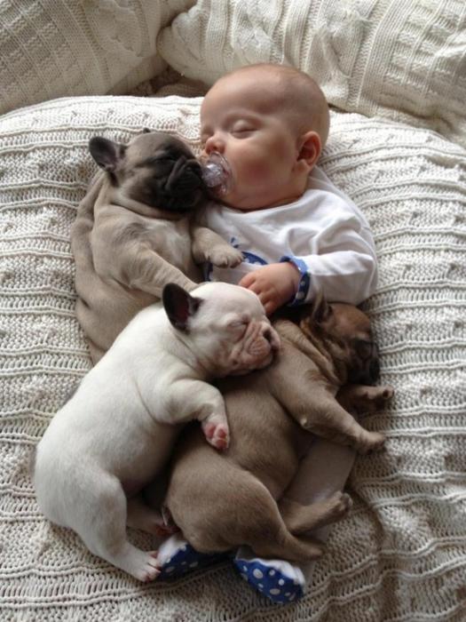 смешные фото детей и собак (525x700, 259Kb)