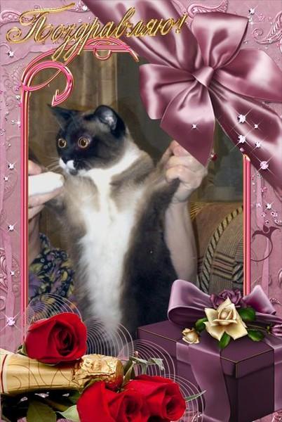 Соня-моя кошка (402x600, 77Kb)