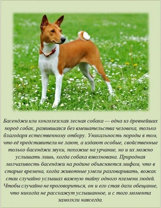 http://img0.liveinternet.ru/images/attach/c/8/99/904/99904498_15.jpg