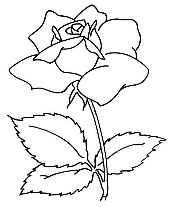 flowers-3 (571x700, 49Kb)