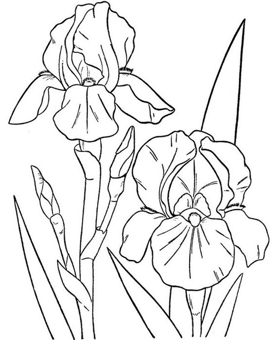 flowers-12 (572x700, 67Kb)