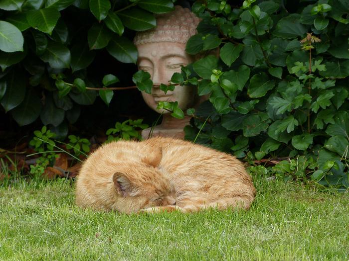 Будда и спящий кот (700x525, 293Kb)