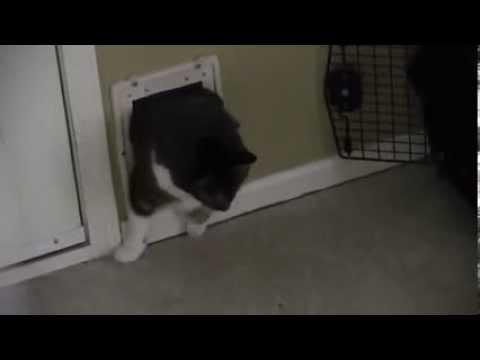 белье для гифки пришли за котом уход термобельем