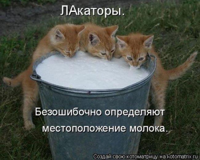 1315308302_1313674082_kotomatrix_40 (650x520, 61Kb)