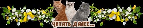 далее-кошки1 (500x100, 80Kb)