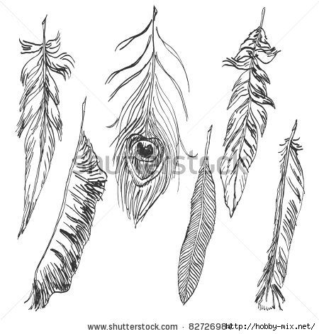 stock-vector-hand-drawn-feather-collection-82726984 (450x470, 113Kb)
