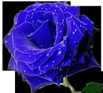0_642bd_112ec02d_S (150x135, 37Kb)