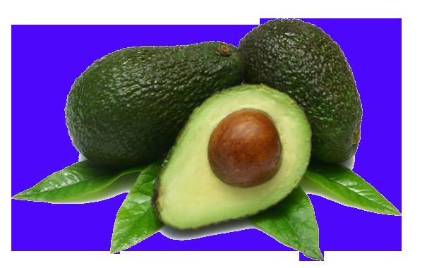 авокадо/4348076_99avokado (605x380, 249Kb)