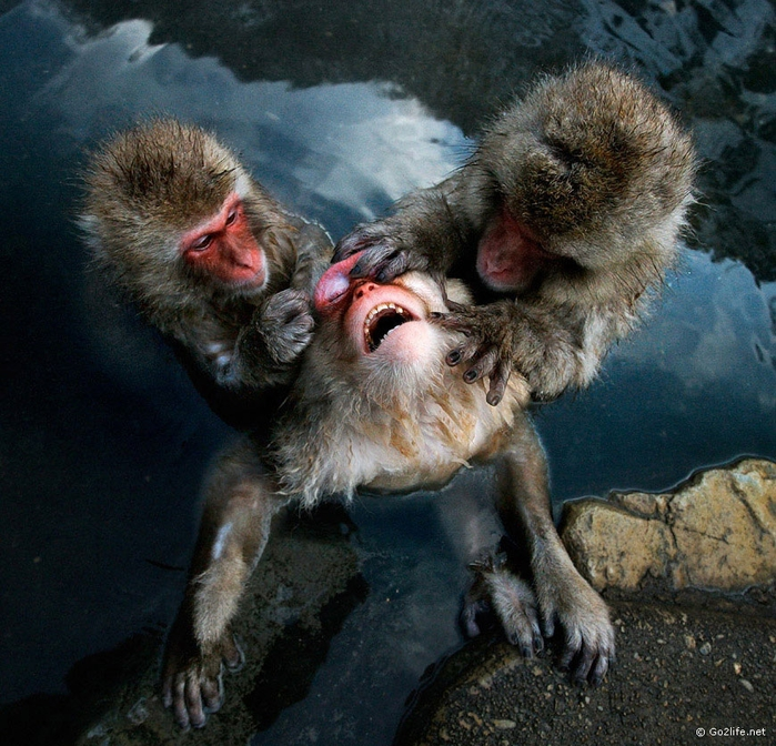 природы-живой-кадры-картинки кошки-собаки-смешные животные-котэ_64860774 (700x672, 397Kb)