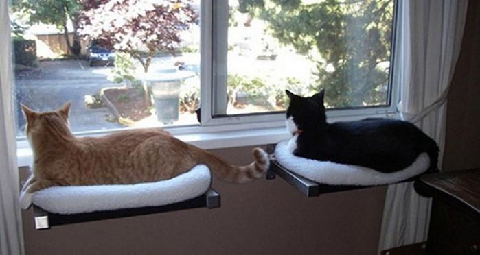 кошки интерьер окно