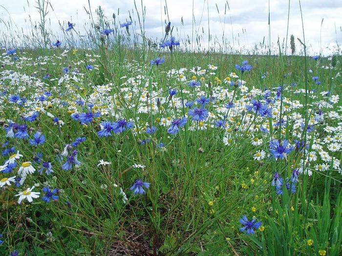 Цветущие луга и поля. Краски прошедшего лета!