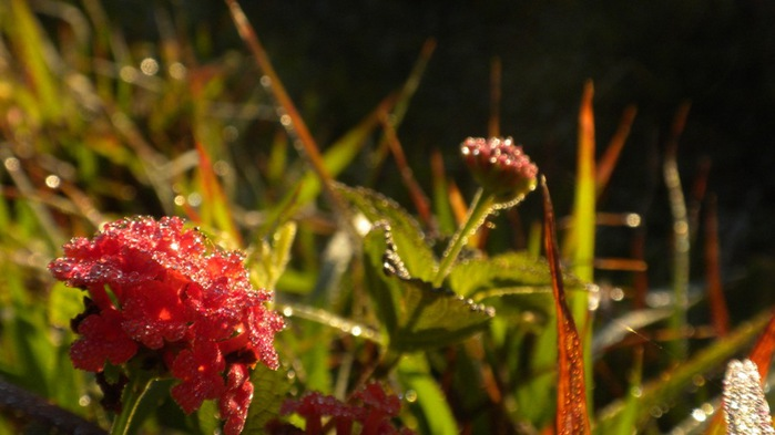 3303834_drops_light_16 (700x393, 73Kb)