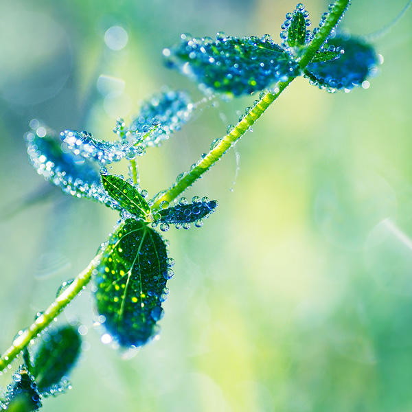 3303834_drops_light_13 (600x600, 159Kb)