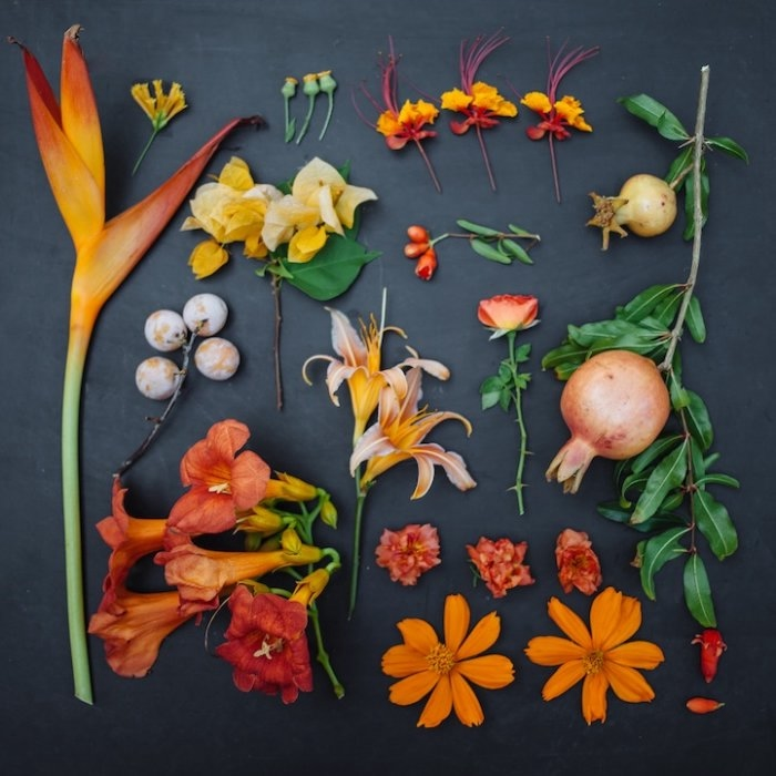 Emily Blincoe фото цветов 1 (700x700, 176Kb)