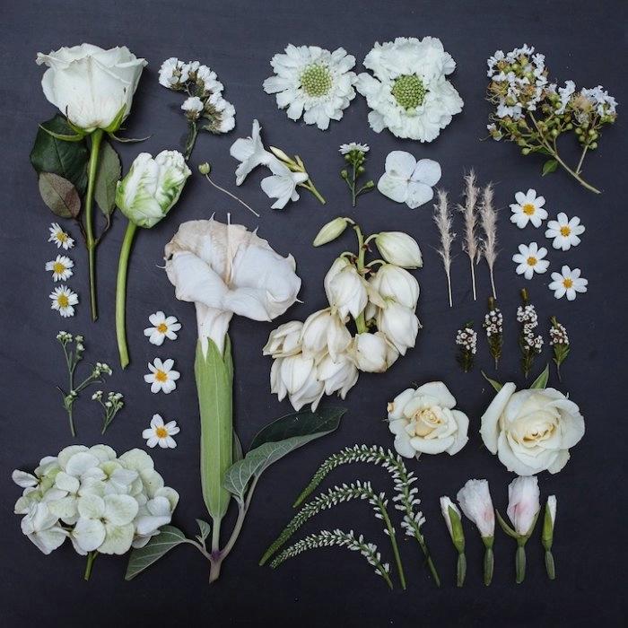 Emily Blincoe фото цветов 2 (700x700, 209Kb)