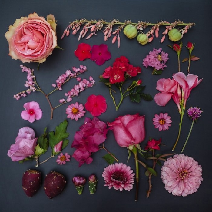 Emily Blincoe фото цветов 4 (700x700, 186Kb)