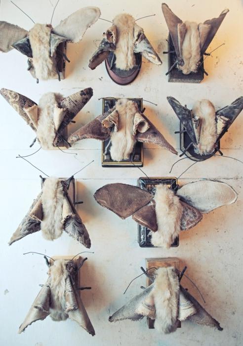 Коллекцию бабочек и моли сшить не хотите А мистер Финч шьет) (23) (492x700, 248Kb)