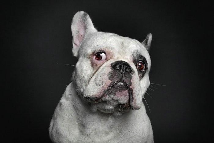 прикольные фото собак (700x466, 73Kb)