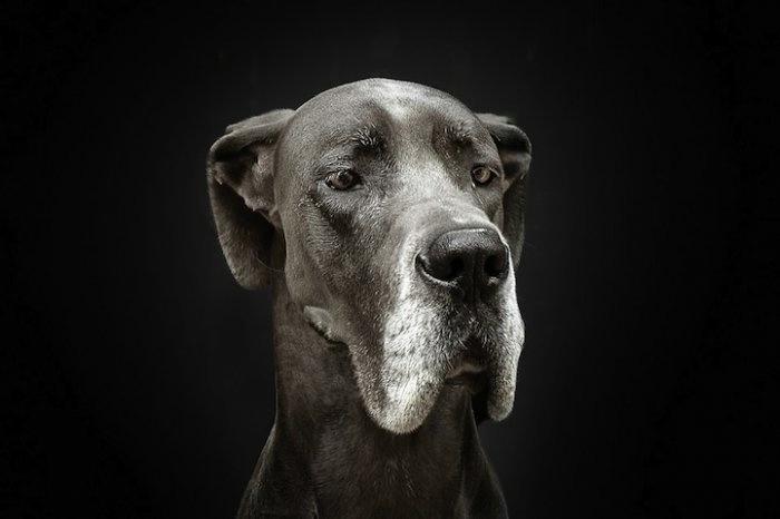 прикольные фото собак 2 (700x466, 68Kb)