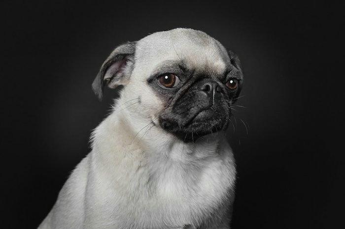 прикольные фото собак 4 (700x466, 65Kb)