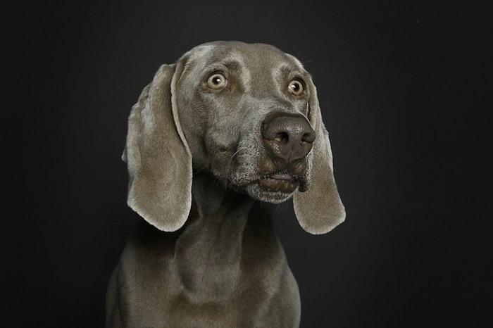 прикольные фото собак 6 (700x466, 63Kb)