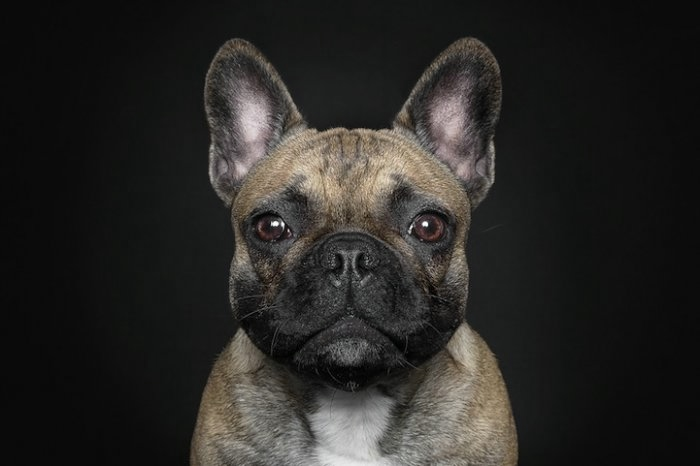 прикольные фото собак 8 (700x466, 82Kb)