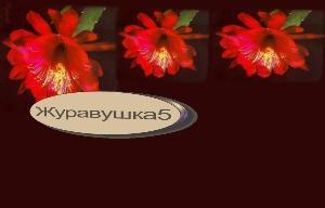 красный цветок (300x192, 43Kb)