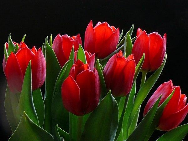кр.тюльпан 14 (600x450, 220Kb)