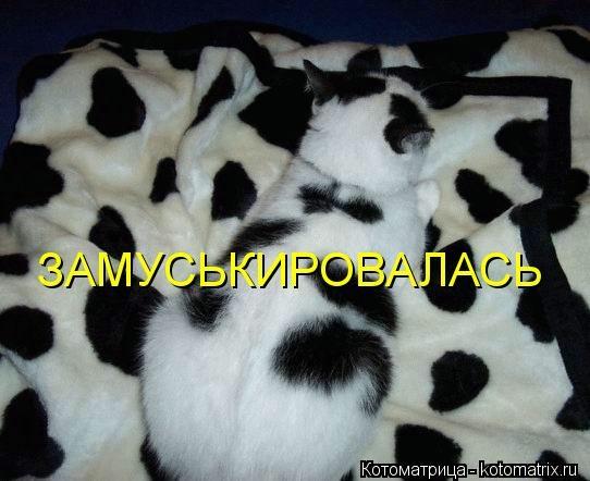 kotomatritsa_86 (542x442, 96Kb)