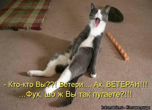 kotomatritsa_E (650x468, 170Kb)