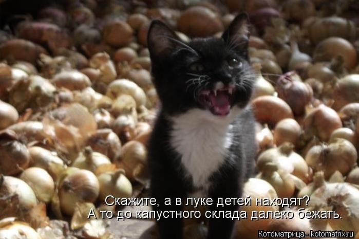 kotomatritsa_JA (700x465, 202Kb)