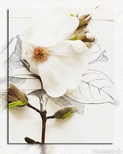 авацветок (400x500, 79Kb)