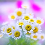 Превью blissful_by_lpdragonfly-d2v6srp (500x500, 160Kb)