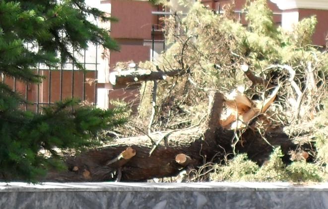 Нехилый смерч - сломать такое дерево (661x422, 713Kb)