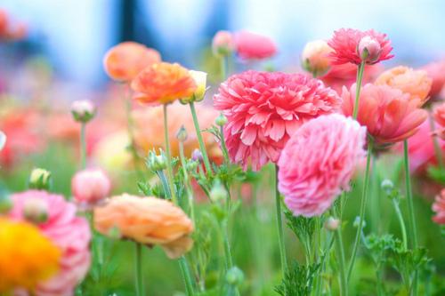 Цветы на т