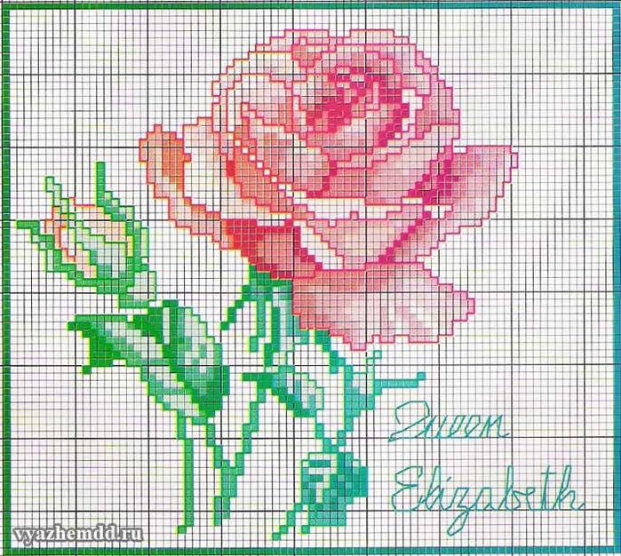 besplatnaya-shema-vyshivki-rozovaya-roza (700x626, 606Kb)