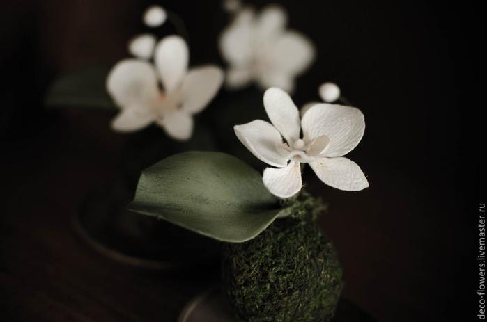 83f13422431-tsvety-floristika-kokedama-falenopsis (700x463, 134Kb)