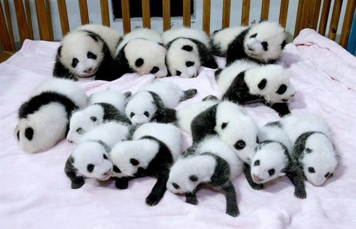 To Chengdu with Children  More than Giant Pandas!!!