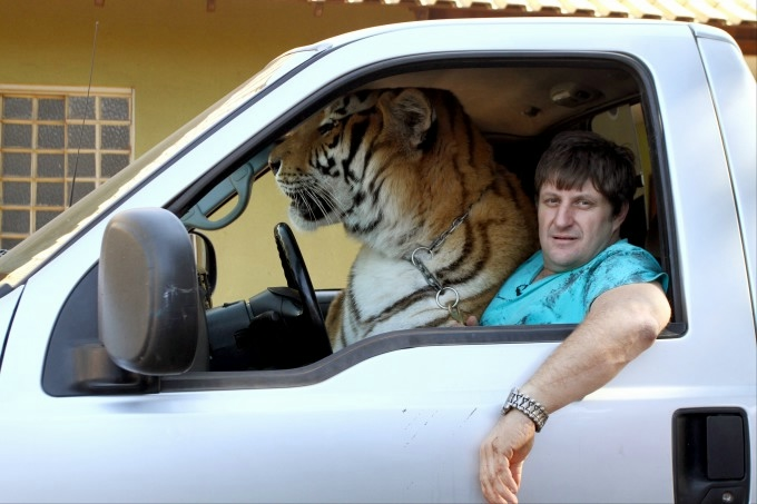 тигры фото 2 (680x453, 133Kb)