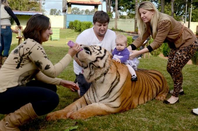 тигры фото 7 (680x452, 216Kb)