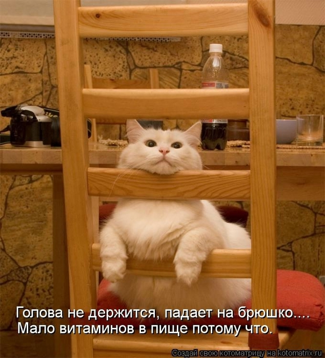 104257024_large_kotomatritsa_iA (634x699, 294Kb)