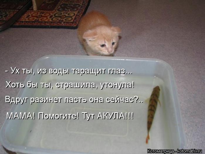 104502326_large_kotomatritsa_4l (700x524, 207Kb)